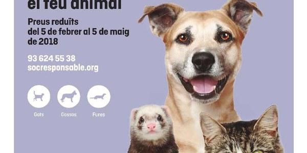 CAMPANYA 2018 D'IDENTIFICACIÓ amb  XIP  I CENS D'ANIMALS DE COMPANYIA (gats, gossos i fures)