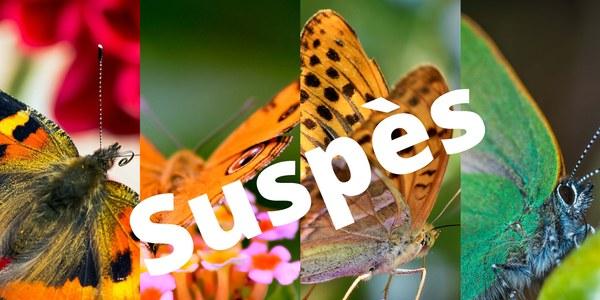 Exposició de papallones SUSPÈS