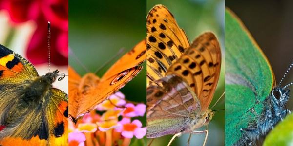 Exposició de papallones